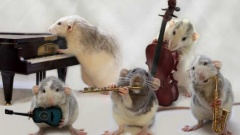 50 полезных сайтов для музыкантов